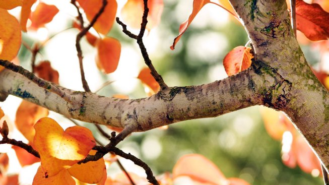 fall_tree_branch_by_eckkko-d5edvrg