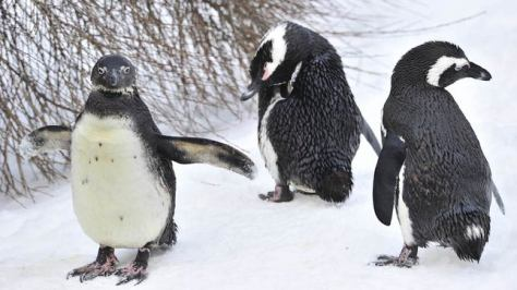 penguins_getty