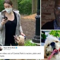 #CentralParkKaren #AmyCooper has been FIRED after falsely calling police on Black birdwatcher! [Vid]